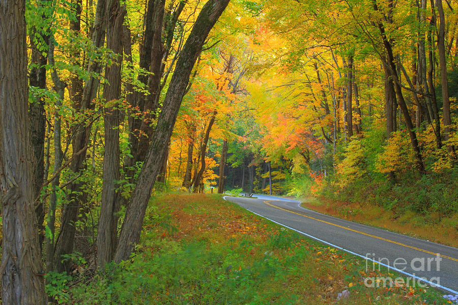 Drive Photograph - Driving Into Fall by Geraldine DeBoer