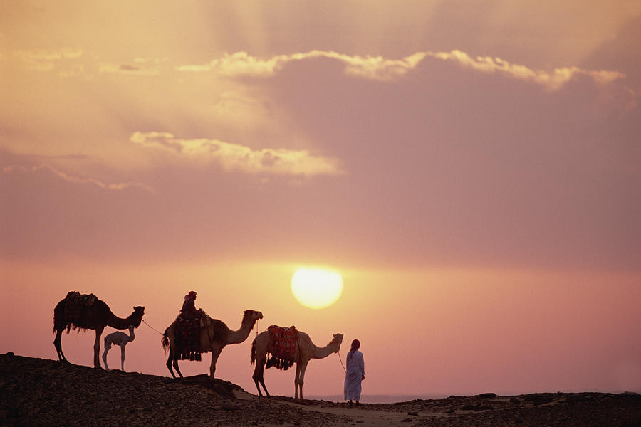 Dromedary Camels And Bedouins Sahara Photograph by Gerry Ellis