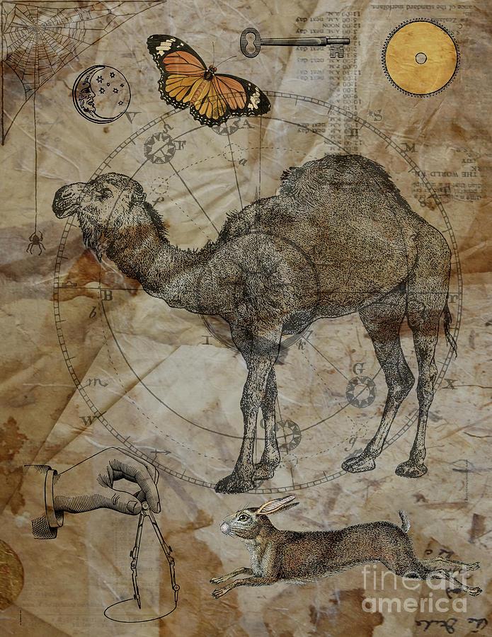 Dromedary Digital Art - Dromedary by Judy Wood