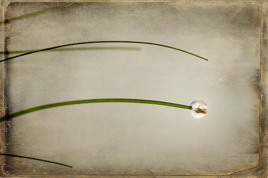 Abstract Mixed Media - Drop by Svetlana Sewell