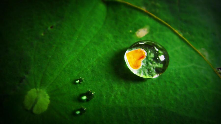 Heart Photograph - Droplet Of Love by Suradej Chuephanich