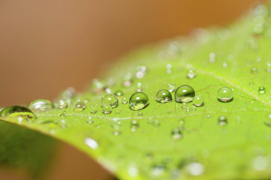 Droplets On A Leaf Photograph by Michael Phillips