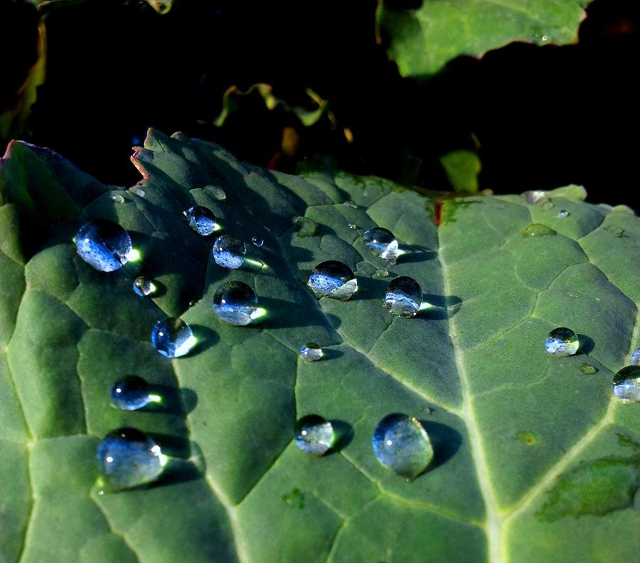 Drops On A Leaf Photograph by Claudia Cefali