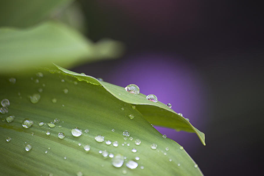 Drops Photograph - Drops by Thomas Glover
