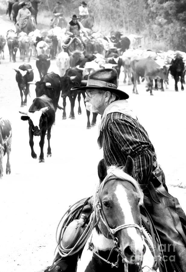 Kansas Photograph - Drover At Work by Fred Lassmann