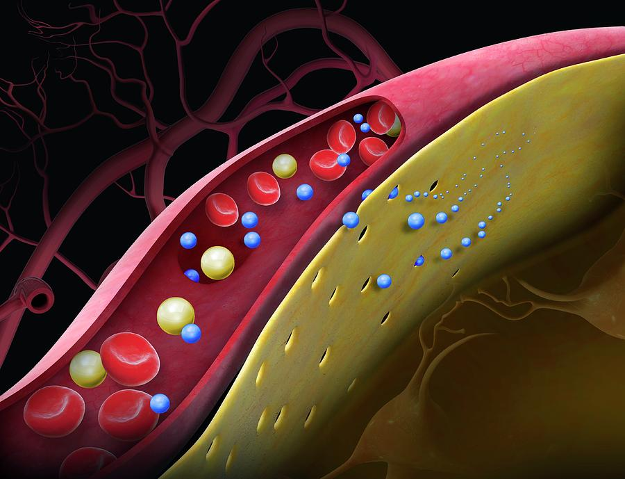 Blood-brain Barrier Photograph - Drug Crossing The Blood-brain Barrier by Claus Lunau/science Photo Library