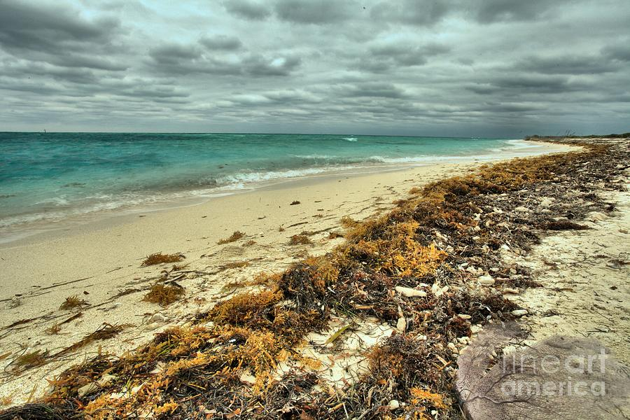 Dry Tortugas Photograph - Dry Tortugas Beach by Adam Jewell