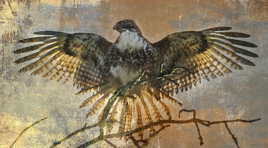 Hawk Photograph - Drying Out by Angie Vogel