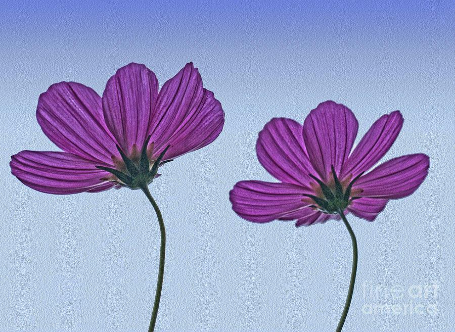 Flowers Digital Art - Dual by Nur Roy