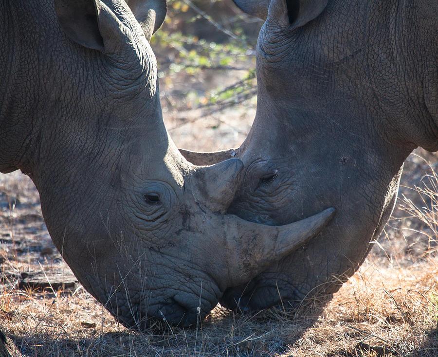 Adventure Photograph - Dual Rhinos by Craig Brown