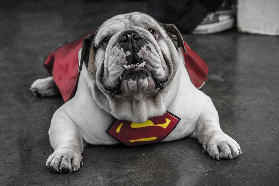 Dublin Comic Con Super Dog Mascot Photograph By David Doyle