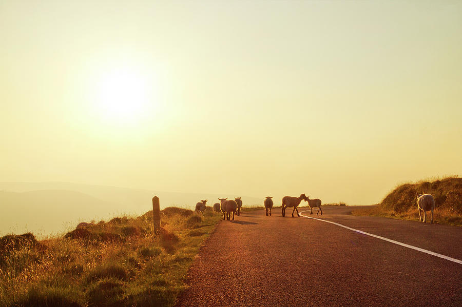 Dublin Mountain Road In Summer Photograph by Image By Catherine Macbride