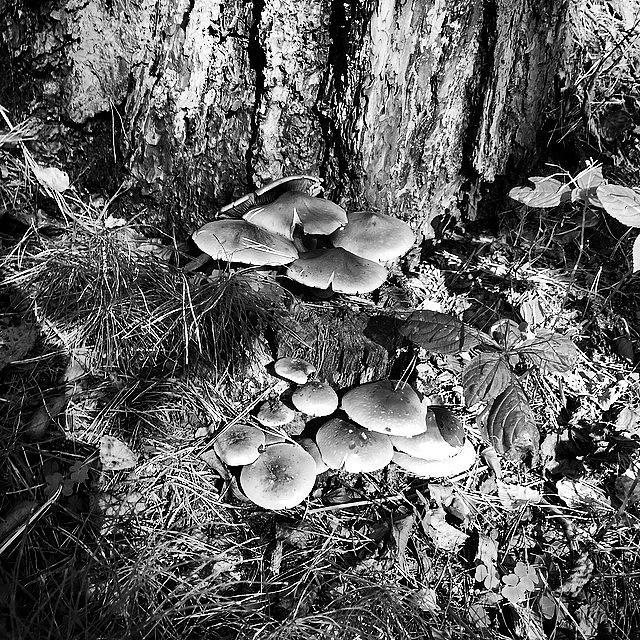 Mushroom Photograph - Mushrooms by Illusorium Illustration
