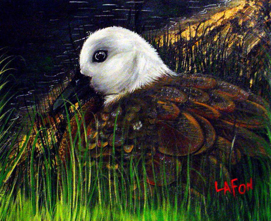 Duck at Dusk by Owen Lafon