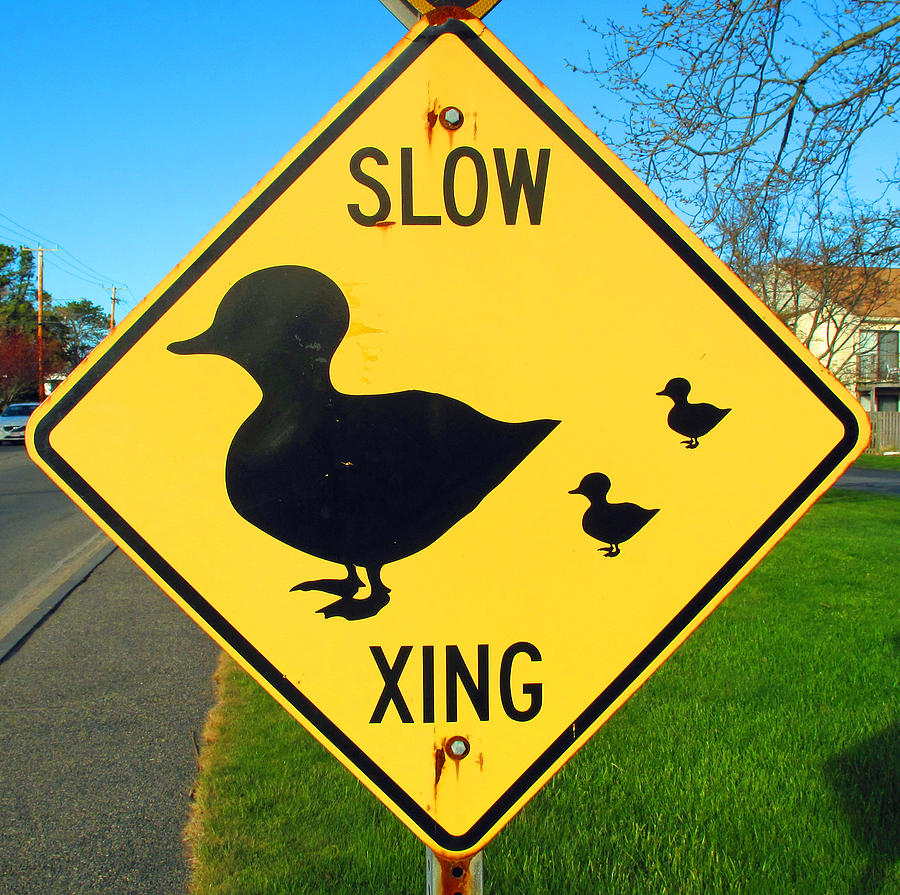 Sign Photograph - Duck Crossing Sign by Barbara McDevitt