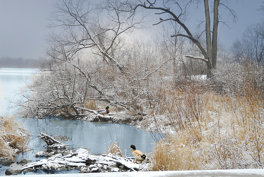 Winter Landscape Photograph - Ducks By The Pond by Mary Timman