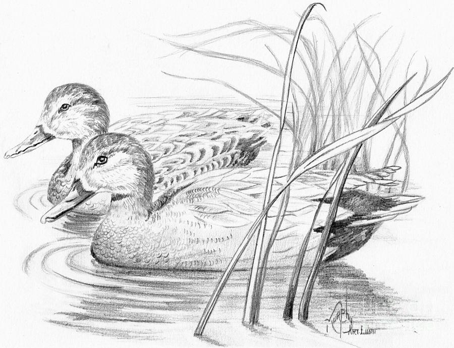 картинки диких птиц простым карандашом карту