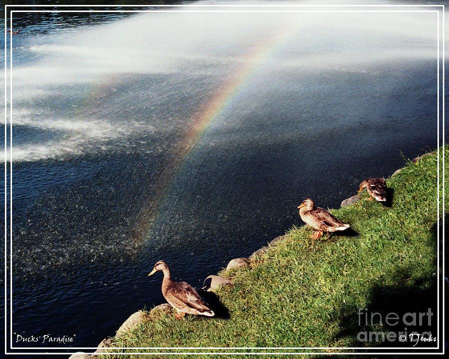 Ducks Photograph - Ducks Paradise by Theodore Jenks