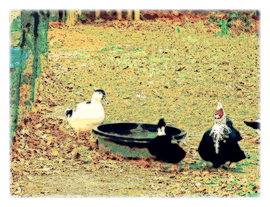 Ducks Mixed Media - Ducky Afternoon by YoMamaBird Rhonda