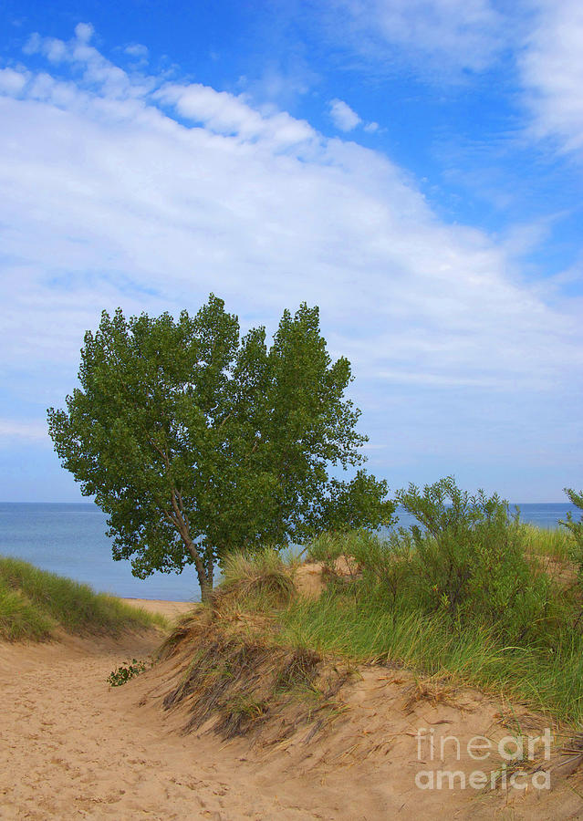 Dune Photograph - Dune - Indiana Lakeshore by Ann Horn