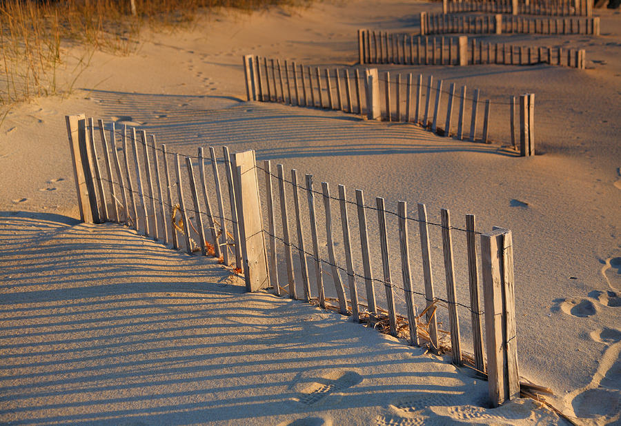 Fence Photograph - Dune Fences Early Morning by Steven Ainsworth