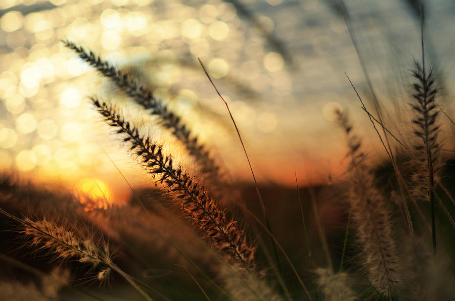 Golden Photograph - Dune by Laura Fasulo