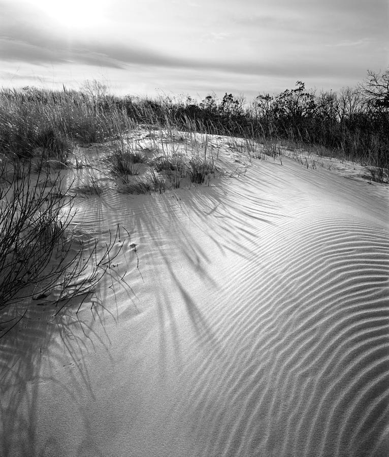 Mount Baldy Photograph - Dune Ripple by James Rasmusson