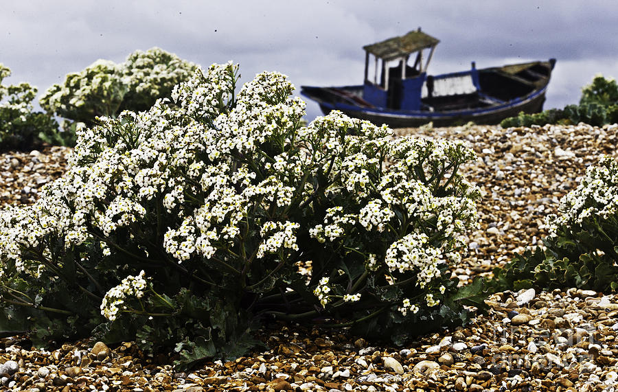 Dungeness Photograph - Dungeness Seascape by Lesley Rigg