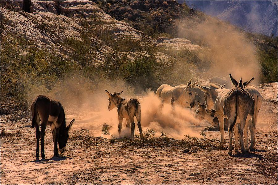 Dust Bath Photograph