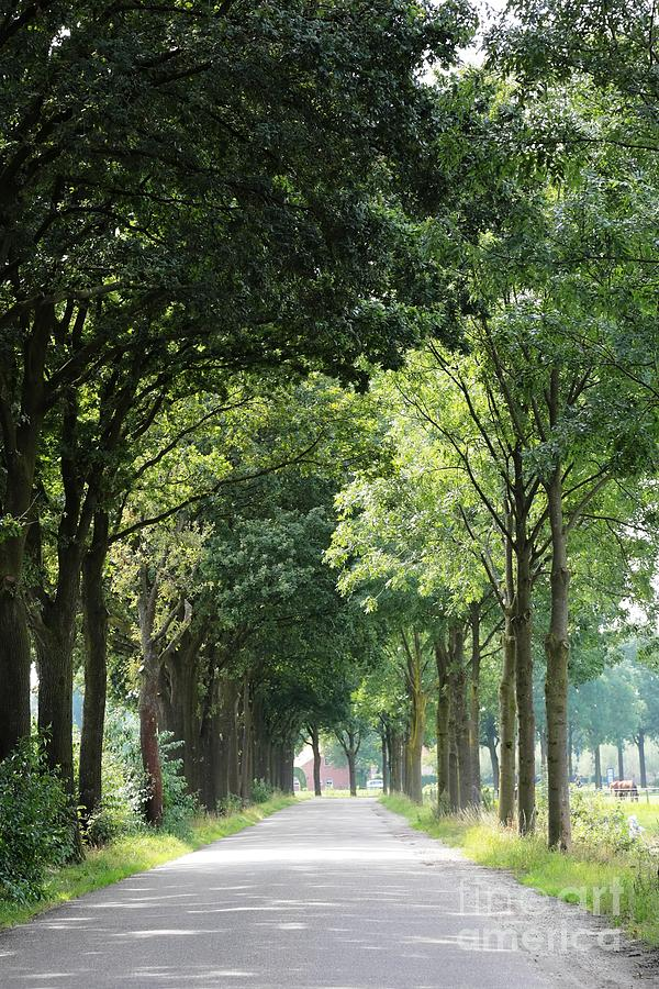 Holland Photograph - Dutch Landscape - Country Road by Carol Groenen