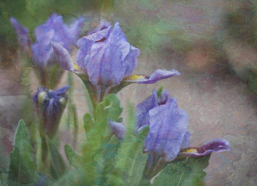 Dwarf Iris With Texture Photograph