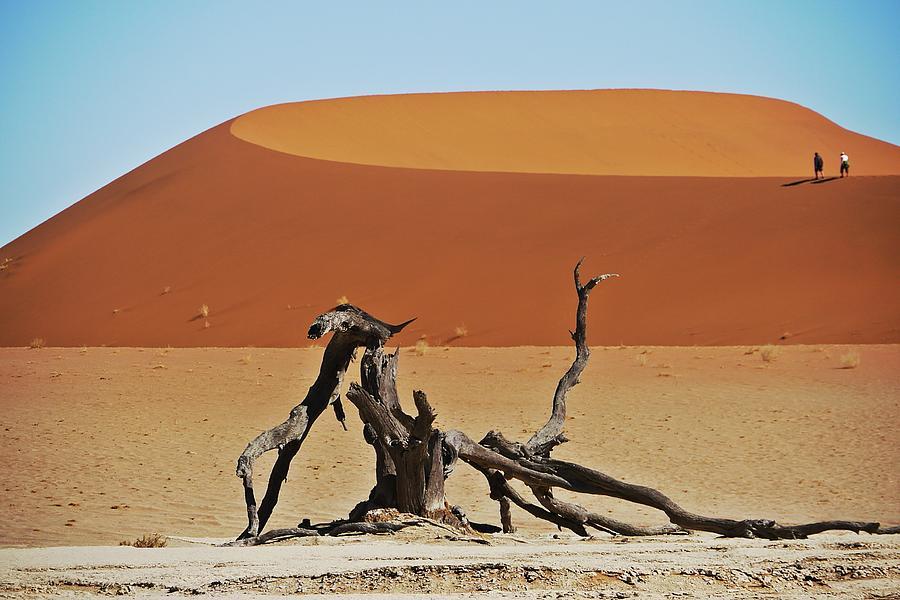 Tree Photograph - Dying Dragon by Liudmila Di