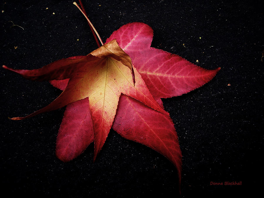 Leaves Photograph - Dying For Love by Donna Blackhall