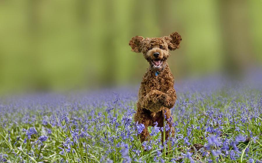 Dog Photograph - Dylan by Aleks Gjika