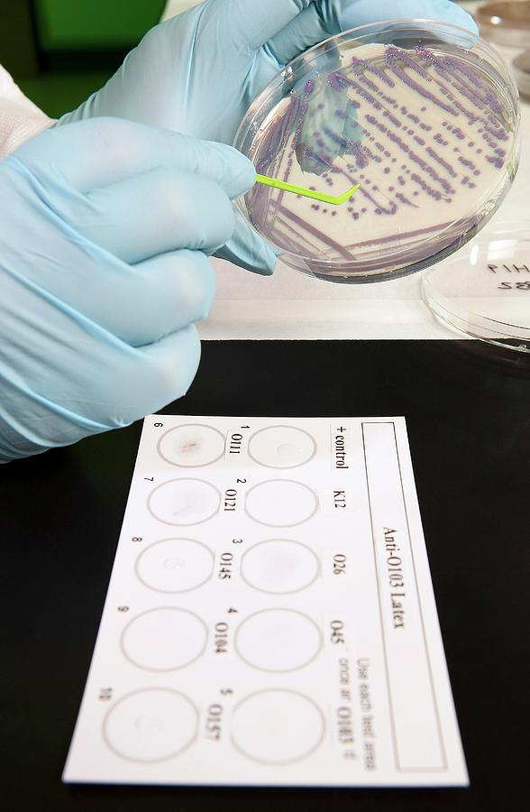 Escherichia Coli Photograph - E. Coli Stec Bacterial Test by Peggy Greb/us Department Of Agriculture