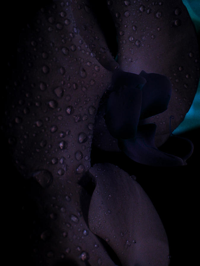 Purple Photograph - Each Droplet Contains A Wish by Tara Miller