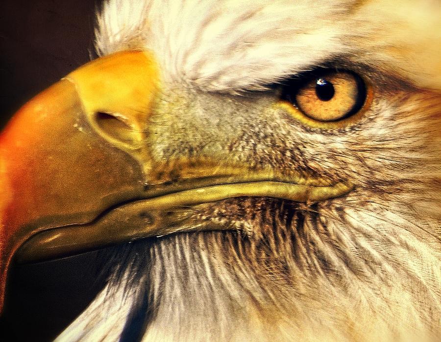 Eagle Photograph - Eagle Eye 7 by Marty Koch