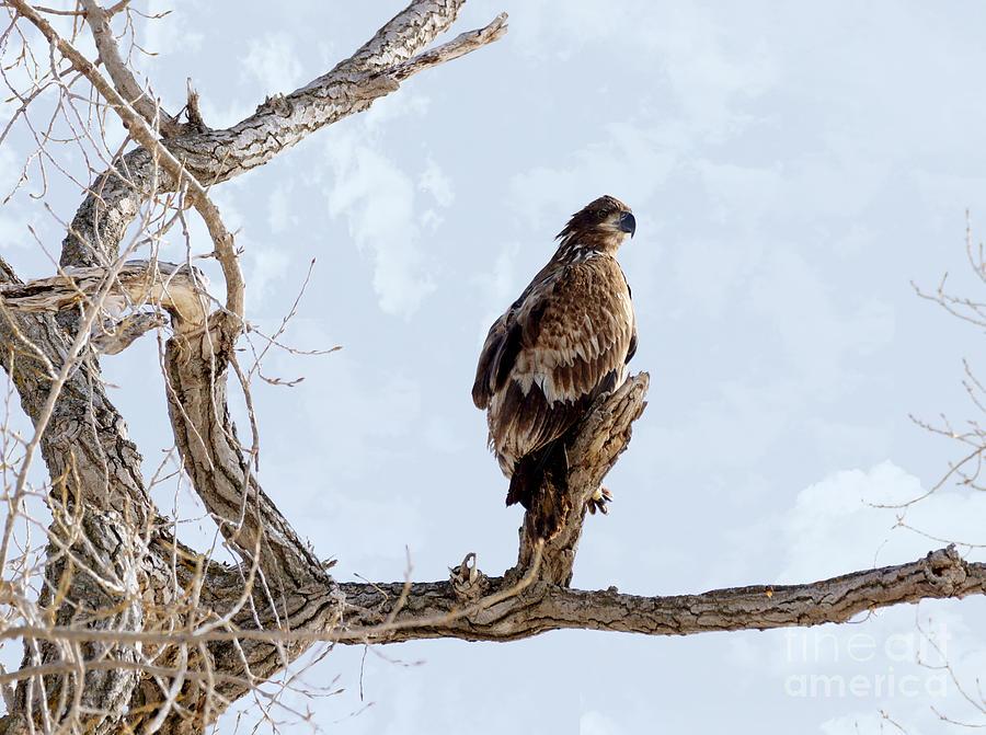 Bald Eagle Photograph - Eagle Eye by Lori Tordsen