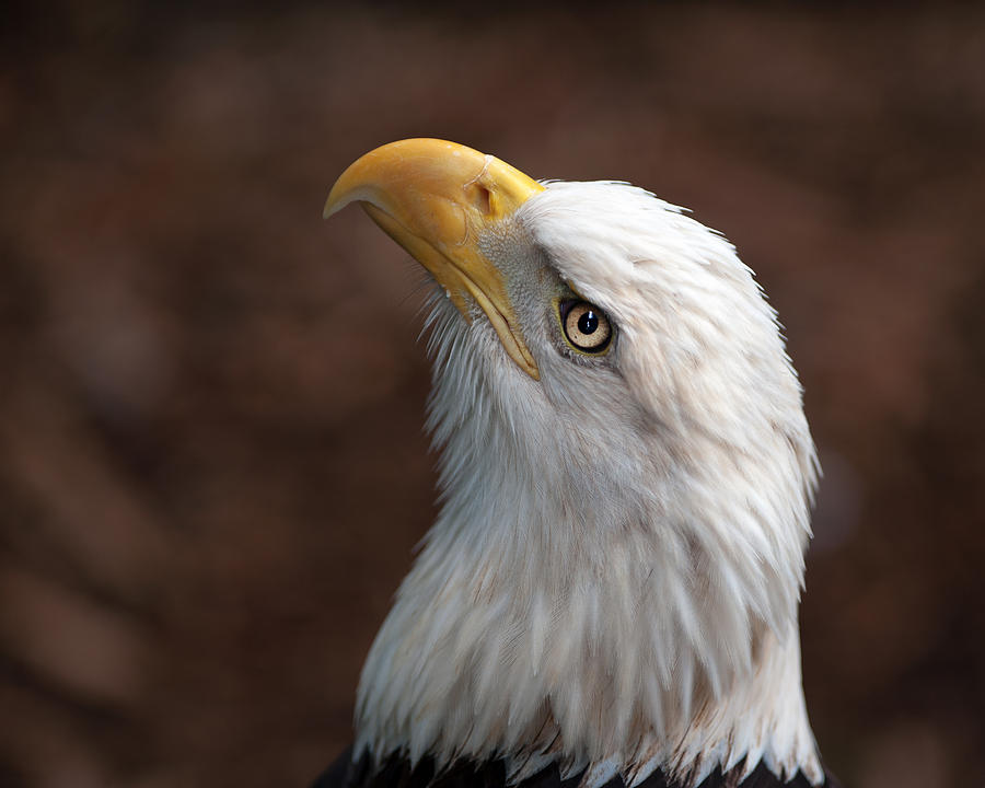 Eagle Eye Photograph by Tammy Smith