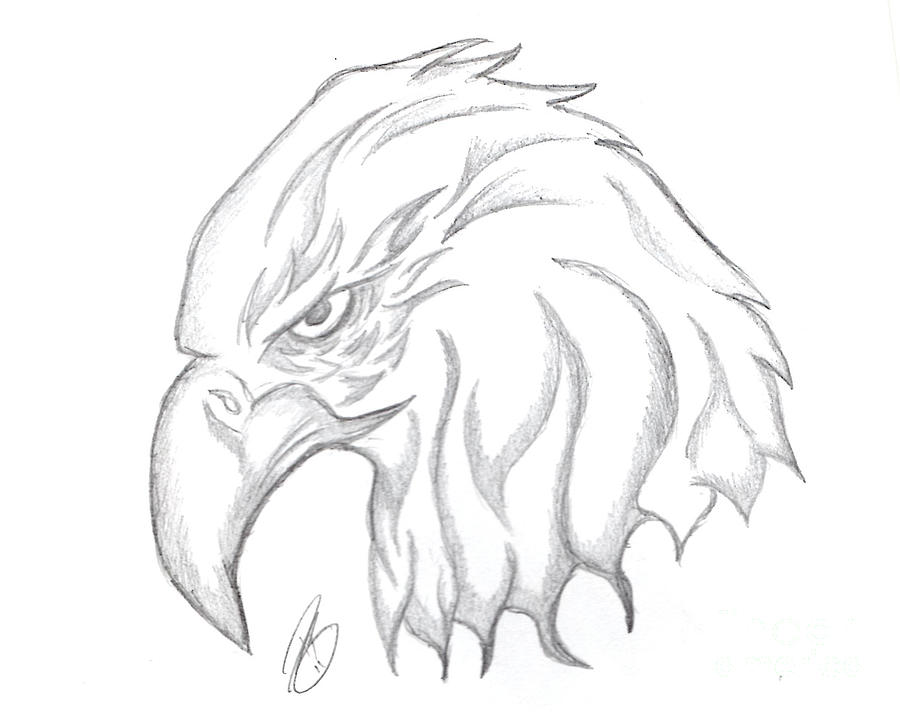 Drawing drawing eagle head drawing by minding my visions by adri and ray