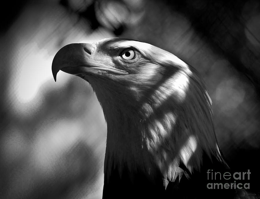 America Photograph - Eagle In Shadows by Robert Frederick