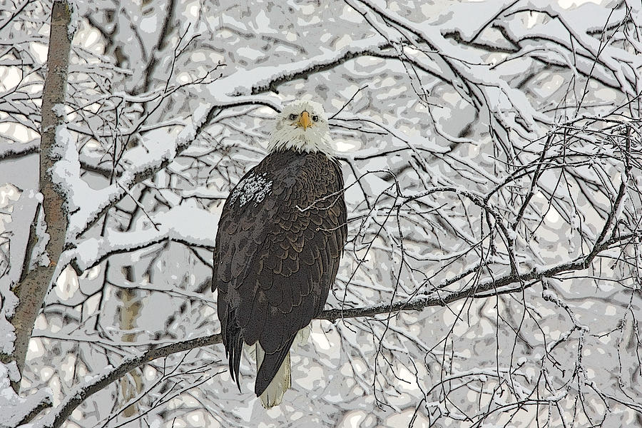 Abstract Photograph - Eagle In Snow- Abstract by Tim Grams