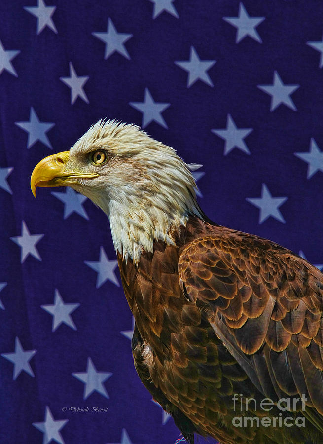 Eagle Photograph - Eagle In The Starz by Deborah Benoit