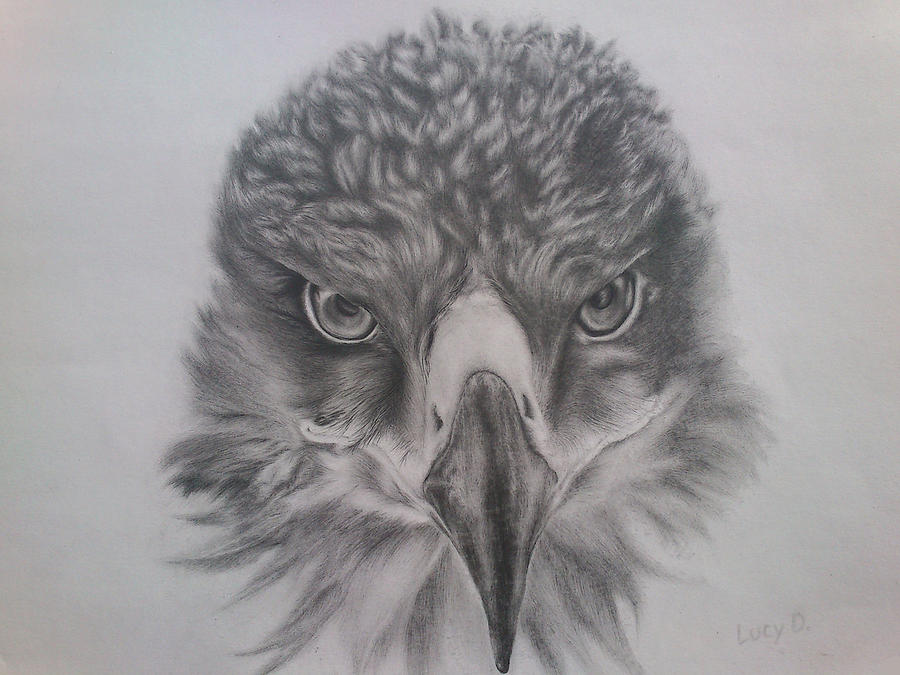 Eagle Drawing - Eagle by Lucy D