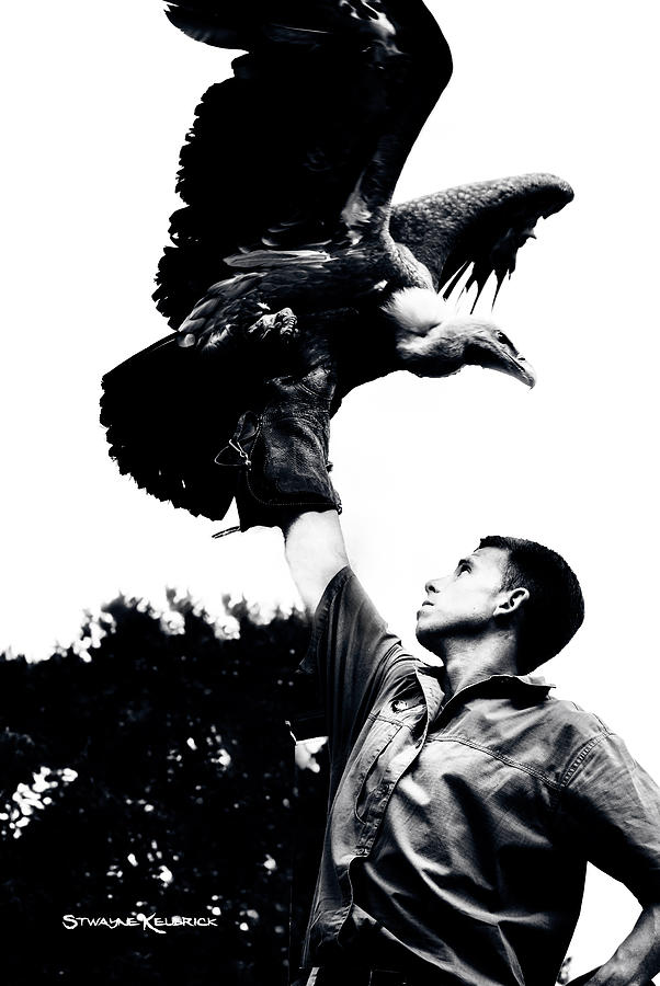 Black And White Photograph - King Of Vultures by Stwayne Keubrick
