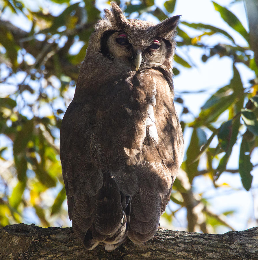 Adventure Photograph - Eagle Owl by Craig Brown