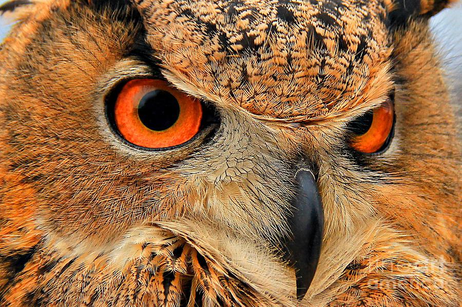 Eurasian Eagle Owl Worlds Largest Photograph - Eagle Owl by Leslie Kirk