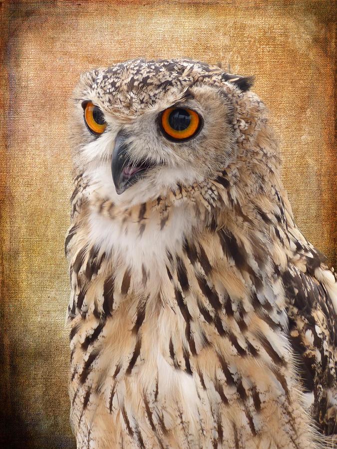 Eagle Owl Photograph