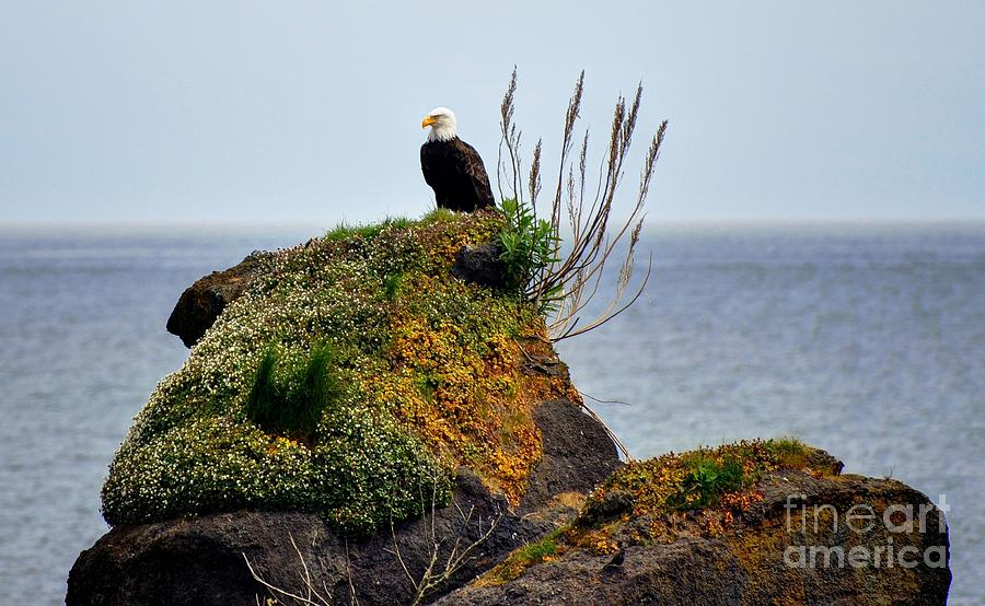 Eagle Photograph - Eagle Resting by Phillip Garcia