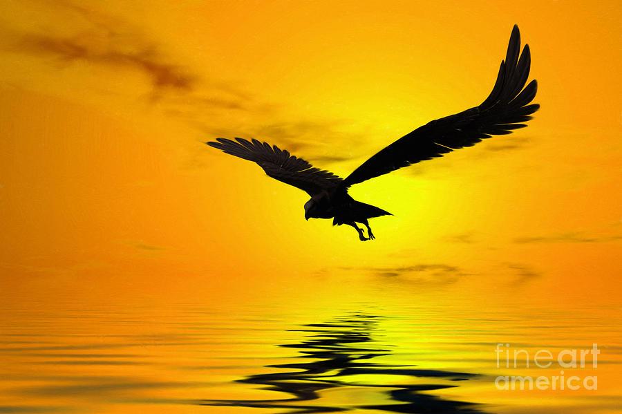 Eagle Digital Art - Eagle Sunset by John Edwards